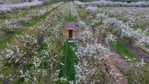 Pod within the orchard