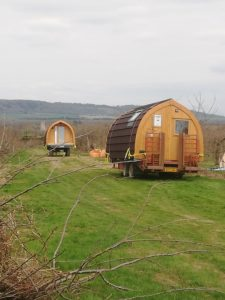 New pods in the orchard
