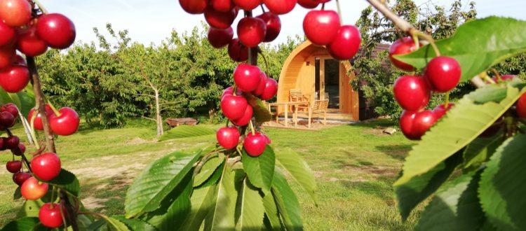 Long Orchard Pod