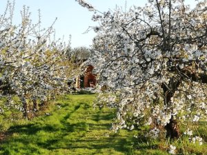 Blossom-around-orchard-pod-3